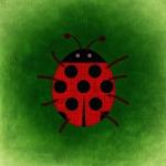ladybug-772621_640
